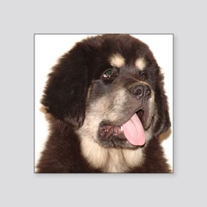 "TibetanMastiff puppy1 Square Sticker 3"" x 3"""
