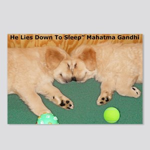 Golden Retriever Puppies, Postcards (Package of 8)