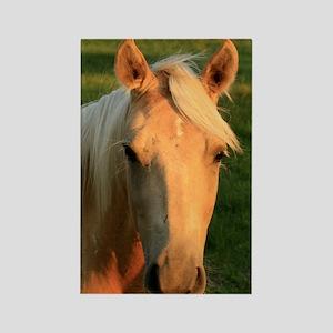 palimino horse 16x20 Rectangle Magnet