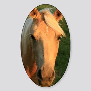 palimino horse 16x20 Sticker (Oval)