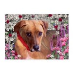 Trista the Rescue Dog in Flowers 5'x7'Area Rug