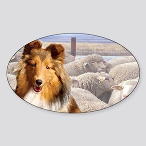 shelty with sheep2 Sticker (Oval)