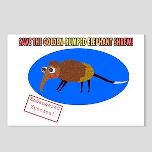 Save the Golden Rumped Elephant Shrew Postcards (