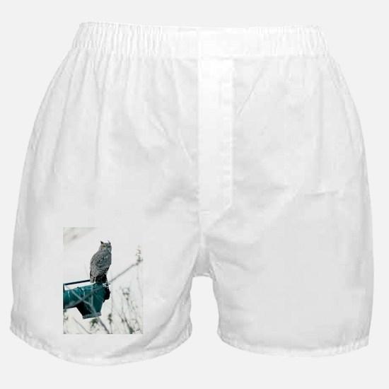 ImWatching Boxer Shorts