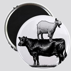 Goat on cow-1 Magnet