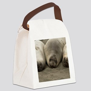 (12) we 3 seals Canvas Lunch Bag