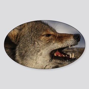 coyote vole portrait Sticker (Oval)