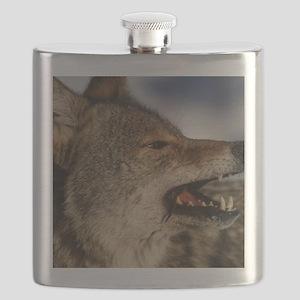 coyote vole portrait Flask