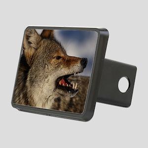 coyote vole portrait Rectangular Hitch Cover