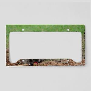 Raccoon License Plate Holder