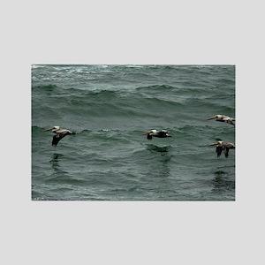 (3) ocean pelican Rectangle Magnet