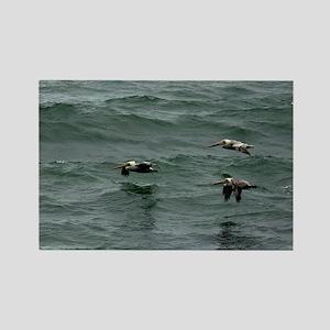 (14) ocean pelican Rectangle Magnet