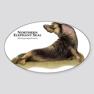Northern Elephant Seal Sticker (Oval)