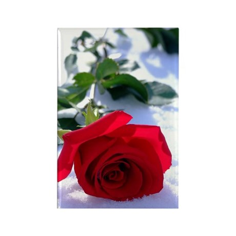 Rose in Snow Rectangle Magnet