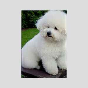 bichon-frise-0043 Rectangle Magnet