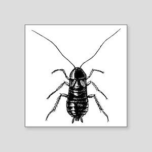 """cockroach_19748 Square Sticker 3"""" x 3"""""""