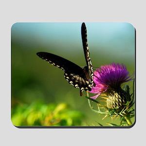Black Swallowtail #080-1 08-22-09 -1 Mousepad