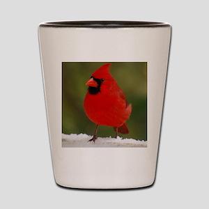 Cardinal for notecard- 01-18-09 and 01- Shot Glass