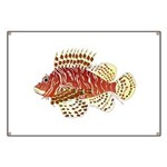 Red Lionfish Banner
