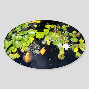 Dirty Water Sticker (Oval)
