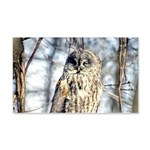 Great Gray Owl 20x12 Wall Decal