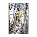 Great Gray Owl Mini Poster Print