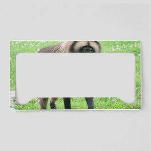 IMG_7254 License Plate Holder