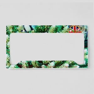Postcard-BandedDascyllus-v1.g License Plate Holder