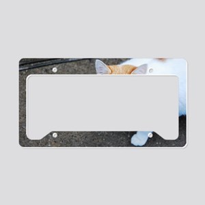 Orange-white cat License Plate Holder