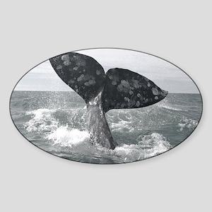 IMG_9025 - Copy Sticker (Oval)