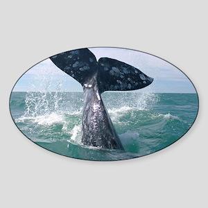IMG_9024 Sticker (Oval)