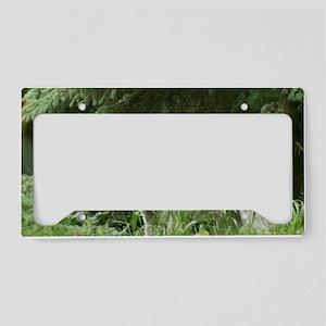 IMG_6111 License Plate Holder