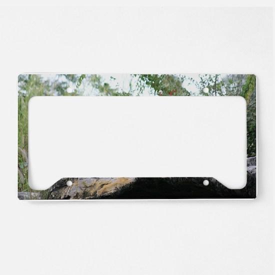IMG_5413 License Plate Holder