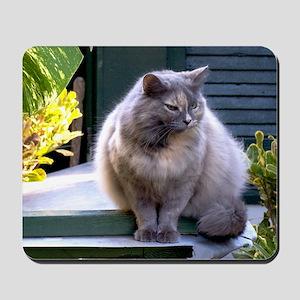 hemingway cat27x5 Mousepad