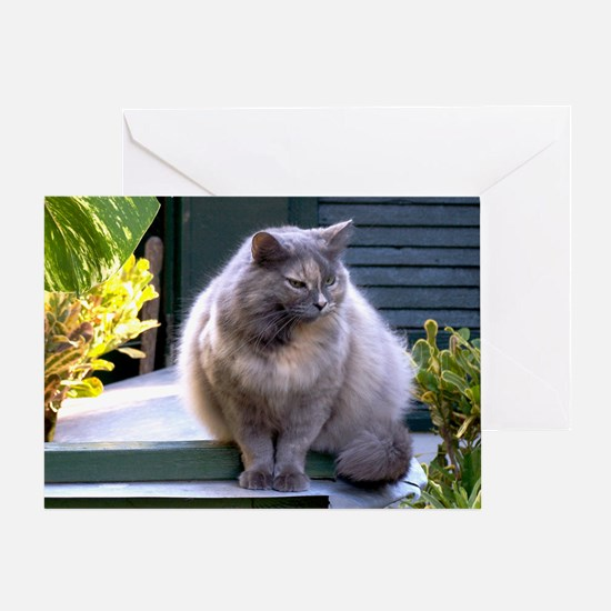 hemingway cat27x5 Greeting Card