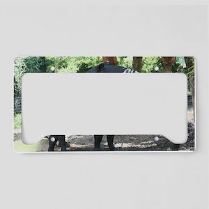 IMG_9323 License Plate Holder