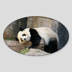 panda1 Sticker (Oval)