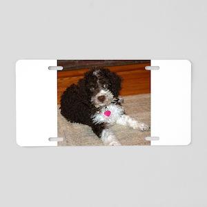 spanish water dog puppy Aluminum License Plate