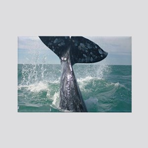 GrayWhale-MP Rectangle Magnet