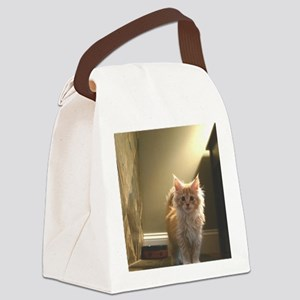 3-orange-maine-coon-kittencp2 Canvas Lunch Bag