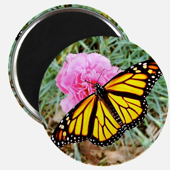 Monarch Butterfly Coasters, Keepsake Boxes, Magnet