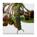 Monarch Butterfly Caterpillar Tile Coaster