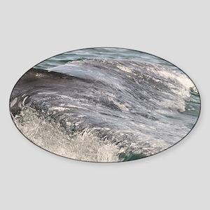 3-IMG_0166 Sticker (Oval)