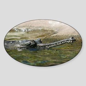 IMG_5469 Sticker (Oval)