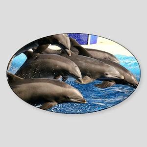 dolphin8 Sticker (Oval)
