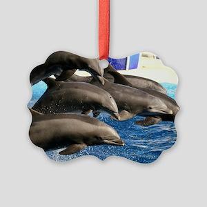 dolphin8 Picture Ornament