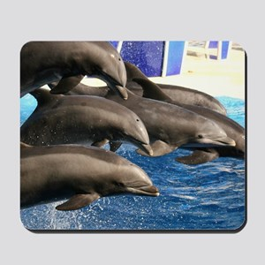 dolphin8 Mousepad