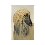 Afghan Hound Rectangle Magnet (100 pack)
