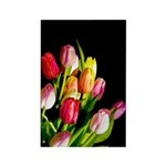 Tulips Rectangle Magnet (100 pack)