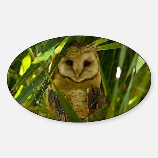 Palm Tree Owlet Sticker (Oval)